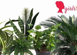 Top-5-plants
